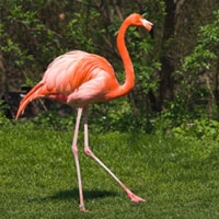 brush-flamingo