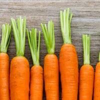 carrots-hip-fractures