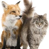 fox and cat
