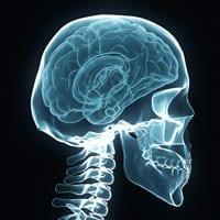 new-brain-bone-connection