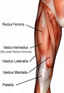 quadriceps-muscles