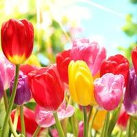 spring-bone-health